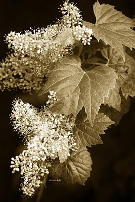Sepia Flower Vine Print by Christina Rollo