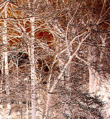 Photograph - Sepia Forest In Winter by Pamela Hyde Wilson