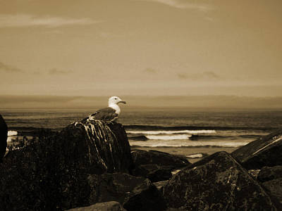 Photograph - Sepia Gull by Jacqueline  DiAnne Wasson