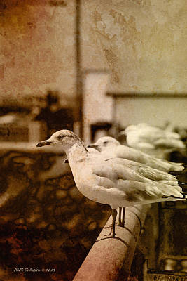 Photograph - Sepia Gulls 2 by WB Johnston
