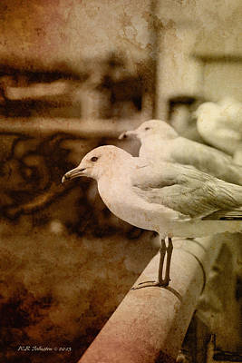 Photograph - Sepia Gulls by WB Johnston