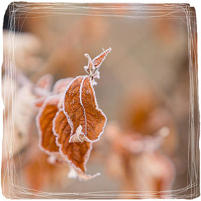 Photograph - Sepia Hoarfrost I by Patti Deters
