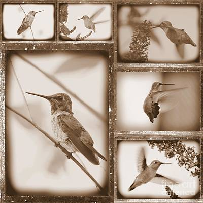 Photograph - Sepia Hummingbird Collage by Carol Groenen