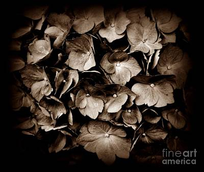 Photograph - Sepia Hydrangea by Chalet Roome-Rigdon
