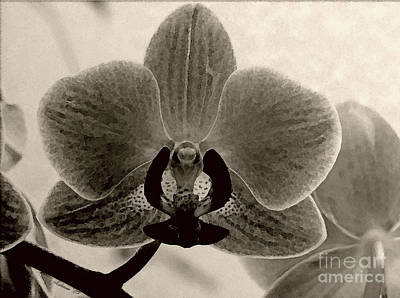 Photograph - Sepia Orchid by Chris Anderson