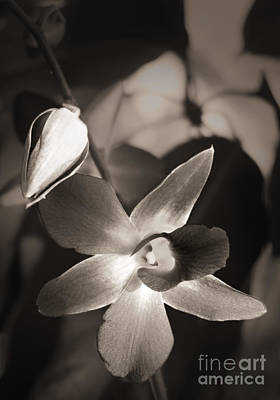 Art Print featuring the photograph Sepia Orchid by Ellen Cotton
