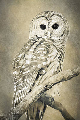 Photograph - Sepia Owl by Christina Rollo