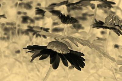 Photograph - Sepia Oxeye Daisy by Tracey Harrington-Simpson