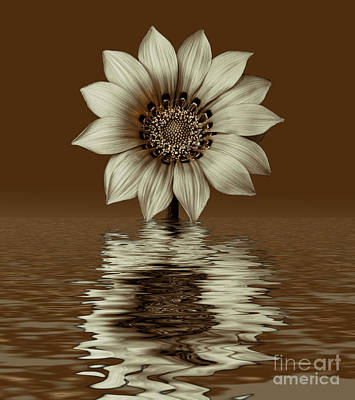 Photograph - Sepia Peruvian Daisy by Shirley Mangini