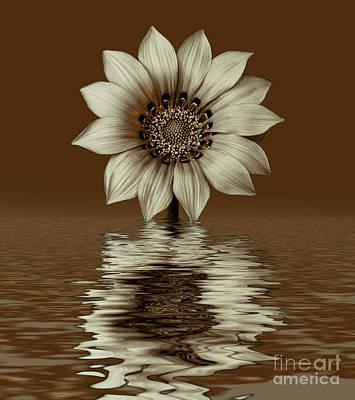 Photograph - Sepia Peruvian Daisy by Shirley Mangini