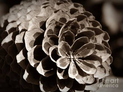 Photograph - Sepia Pine Cone by Chalet Roome-Rigdon