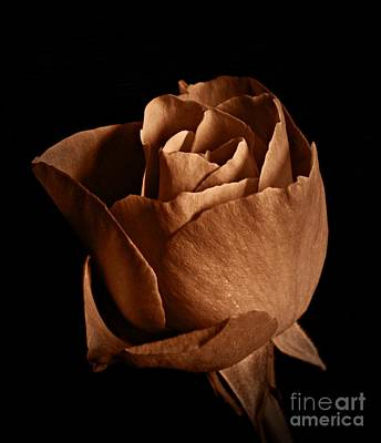 Photograph - Sepia Rose Portrait 1 by Chalet Roome-Rigdon