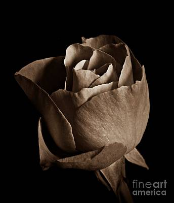 Photograph - Sepia Rose Portrait 2 by Chalet Roome-Rigdon