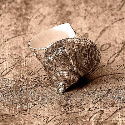 Photograph - Sepia Seashell by Karen Stephenson