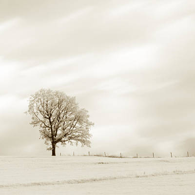 Photograph - Sepia Square Tree by U Schade