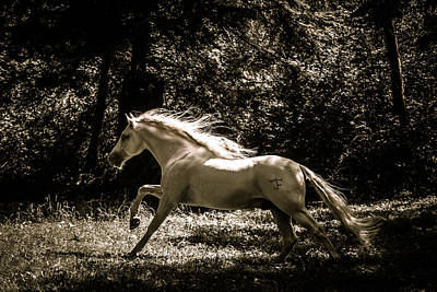 Photograph - Sepia Stallion by Wes and Dotty Weber