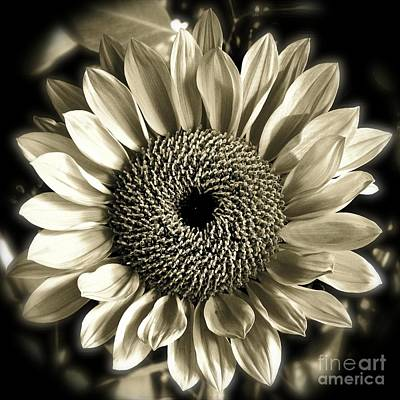 Photograph - Sepia Sunflower by Diana Black