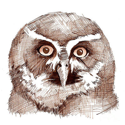 Sepia Ink Drawing - Sepia Toned Owl Drawing by Heather Davis