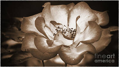 Photograph - Sepia Tones by Elizabeth Winter