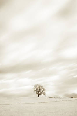 Photograph - Sepia Tree by U Schade