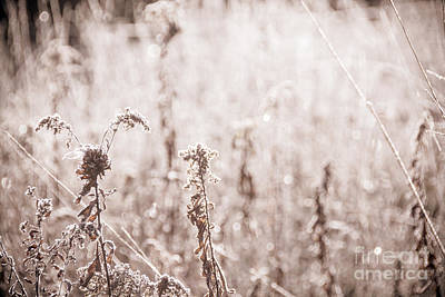 Photograph - Sepia Weeds by Cheryl Baxter