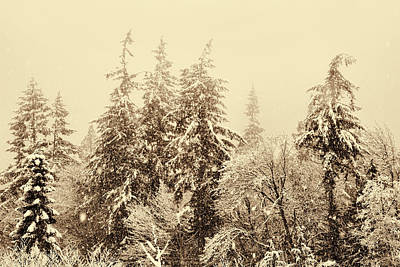 Photograph - Sepia Winter Landscape by Peggy Collins