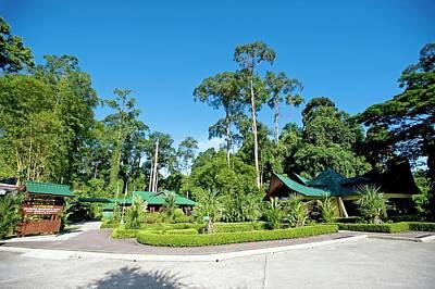 Orangutan Wall Art - Photograph - Sepilok Rehabilitation Centre by Tony Camacho/science Photo Library