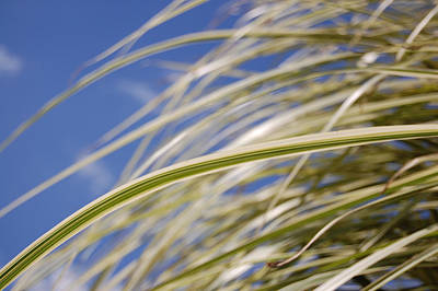 Photograph - September Grasses 1 by First Star Art