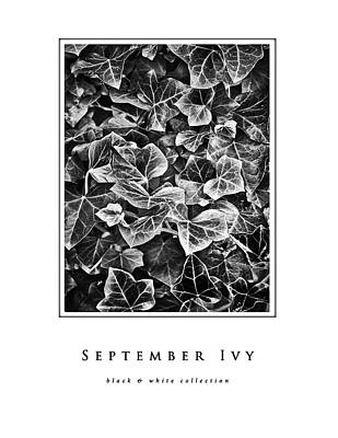Photograph - September Ivy Black And White Collection by Greg Jackson