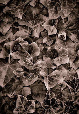 Photograph - September Ivy  by Greg Jackson