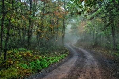 Ldeiter78 Digital Art - September Mist by Lori Deiter