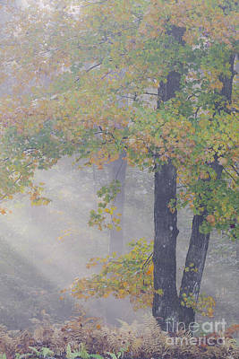Photograph - September Morning Mist by Alan L Graham