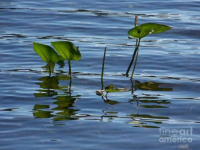 Photograph - September Reflections by Jackie Mueller-Jones