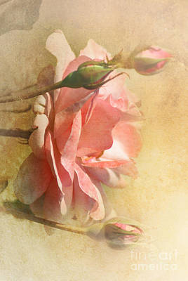 September Rose Art Print by Elaine Manley