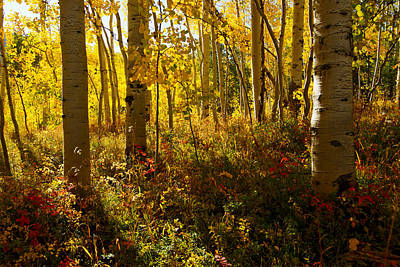 September Scene Art Print by Jeremy Rhoades