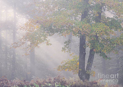 Photograph - September Woodland Mist by Alan L Graham