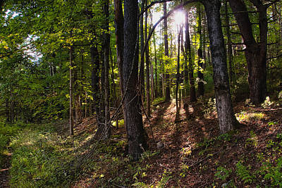 Photograph - September Woods by Steven Mancinelli