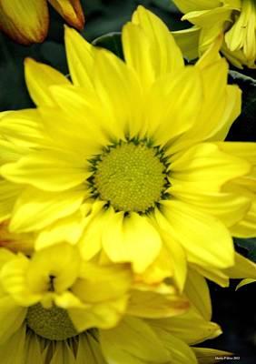 Photograph - September Yellow by Maria Urso