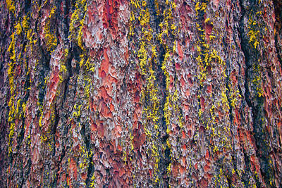 Photograph - Giant Sequoia Tree Closeup Abstract - Sequoia National Park California by Ram Vasudev