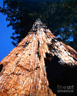 Mixed Media - Sequoia Giant Yosemite Park by Glenn McNary