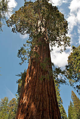 Photograph - Sequoia-kings Canyon Np 183 by Jeff Brunton