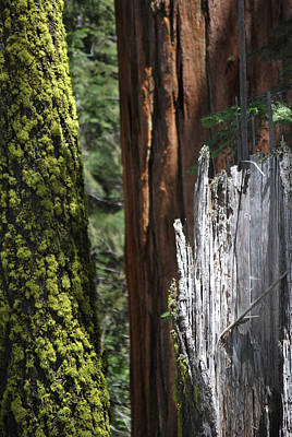 Photograph - Sequoia-kings Canyon Np 213 by Jeff Brunton