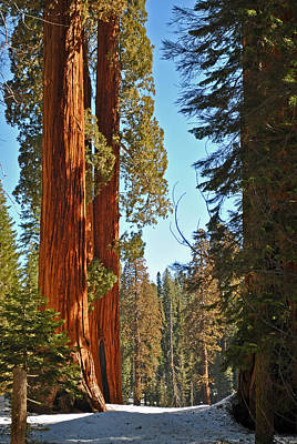 Photograph - Sequoia-kings Canyon Np 94 by Jeff Brunton
