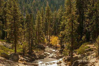 Sequoia National Park  1-7832 Art Print