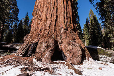 Photograph - Sequoia National Park  by Carol M Highsmith