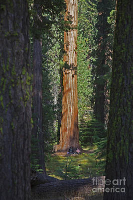 Photograph - Sequoia Siesta by John Stephens