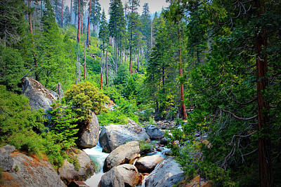 Sequoia Stream Art Print by Heidi Smith