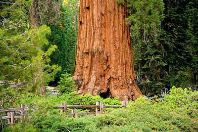Photograph - Sequoia Tree Base by Jane Girardot