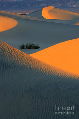 Photograph - Death Valley Serenade In Light by Bob Christopher