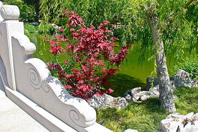 Chinese Red Maple Tree Photograph - Serene Garden by Denise Mazzocco